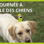 chiens guides